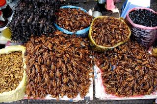 insetti-fritti