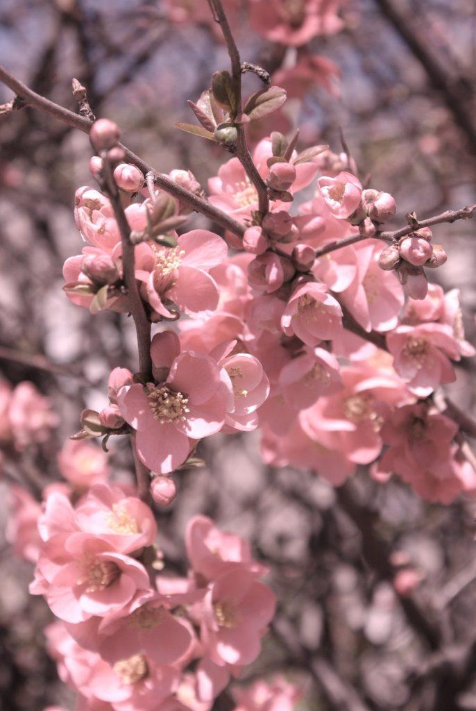 primavera_vero