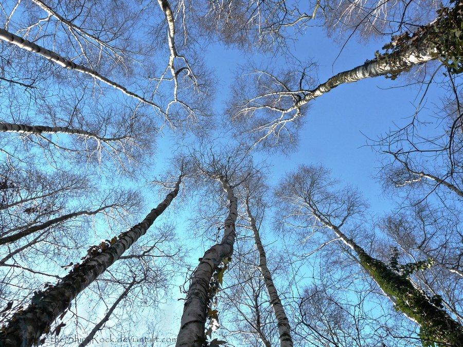 Le_punte_degli_alberi