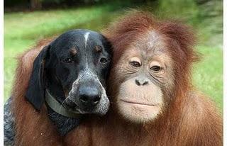 amicizia_animali_15