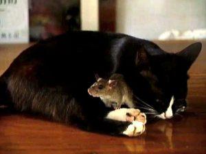 amicizia_animali_3