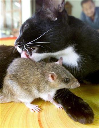 amicizia_animali_4