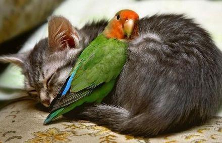 amicizia_animali_7