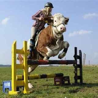 mucca-luna-cavallo