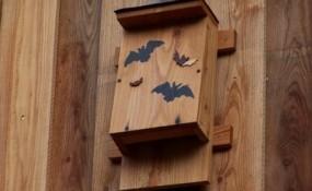 bat_box