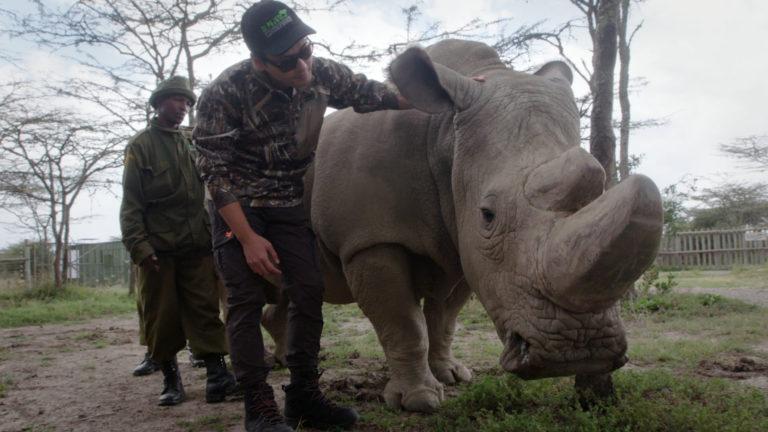 morto l'ultimo rinoceronte bianco