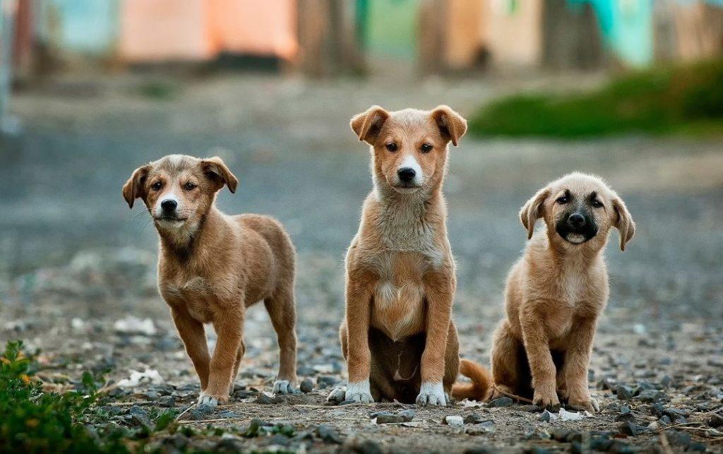 a Morterone più cani che abitanti