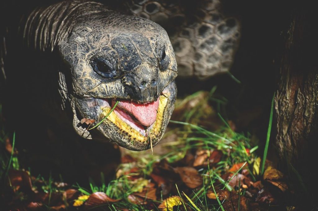 tartaruga estinta