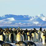 la glaciologa per un anno in Antartide